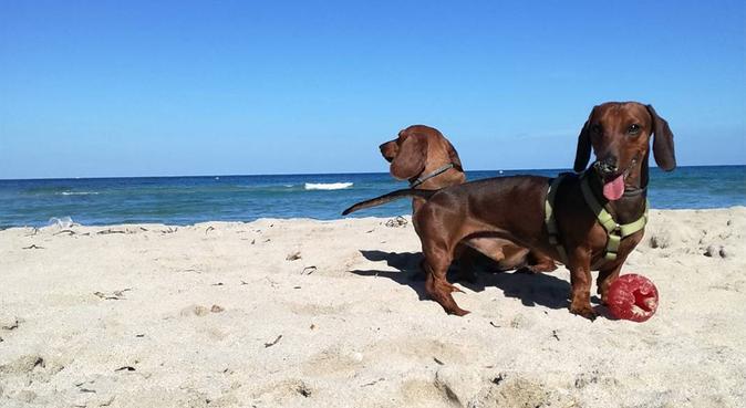 Tanto amore per i vostri amici a 4 zampe, dog sitter a Firenze, FI, Italia