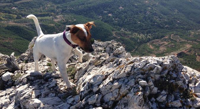 Au paradis des toutous chez Tom, Laloute et Nanou, dog sitter à Marseille