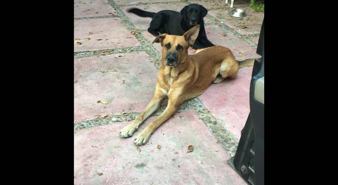 Jugar, jugar y jugar!, canguro en Cartagena