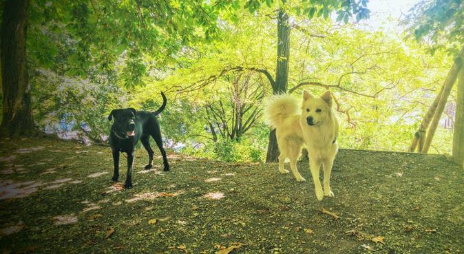 Con le mie passeggiate,soddisfazioni assicurate!, dog sitter a Bologna