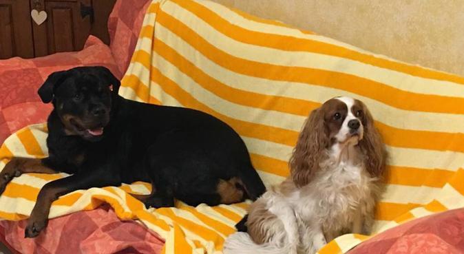 Dolcezza e passeggiate per il tuo migliore amico!, dog sitter a Pisa