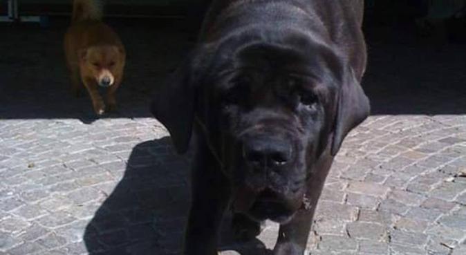 Coccole e allegre passeggiate per il tuo tesorino, dog sitter a Venezia, VE, Italia