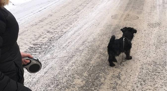 Pensionat Gullvivans hundhjälp, hundvakt nära Gnesta