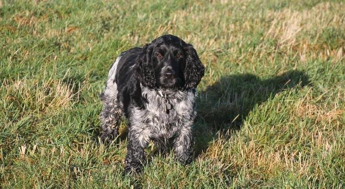 Dog Walking in Tickhill, Bawtry & surrounding area, dog sitter in DONCASTER