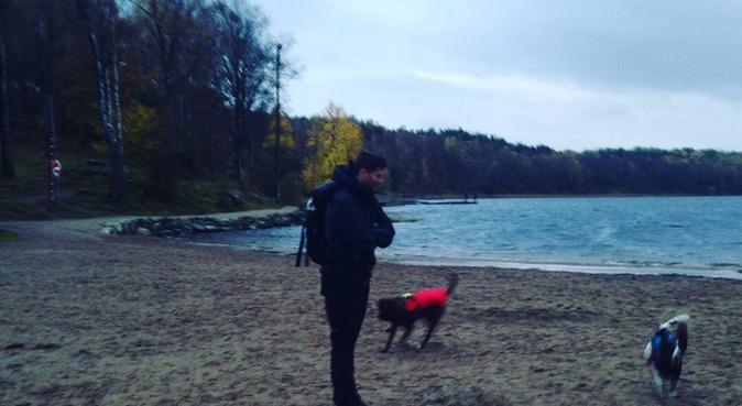 A day out in doggie's paradise, hundvakt nära Göteborg