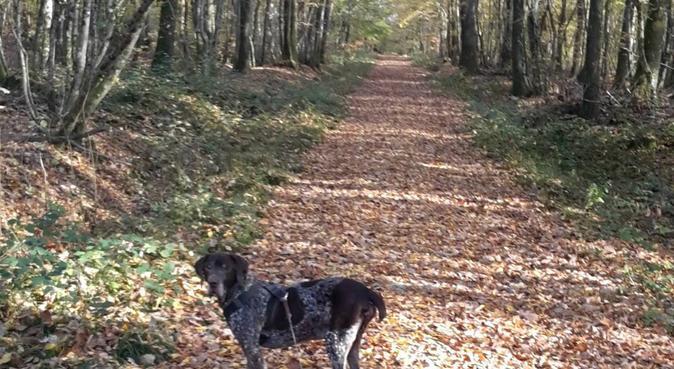 Proprietaire de chien expérimenté, dog sitter à Bourges