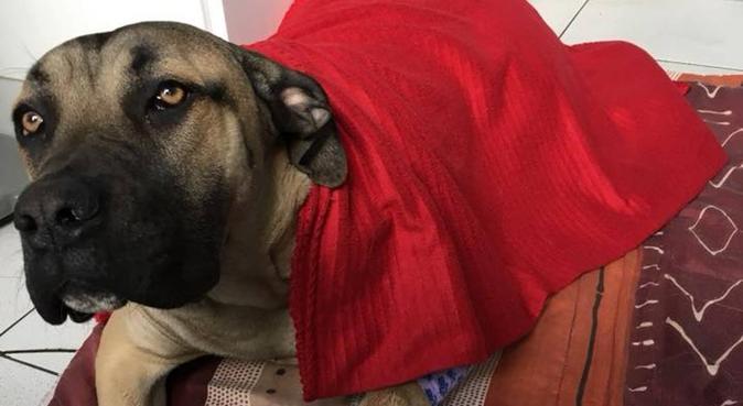 Les câlins de Pauline, dog sitter à Wailly, France
