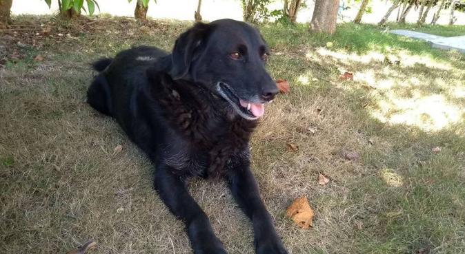 Dogsitting pour chiens heureux à Toulouse, dog sitter à Toulouse
