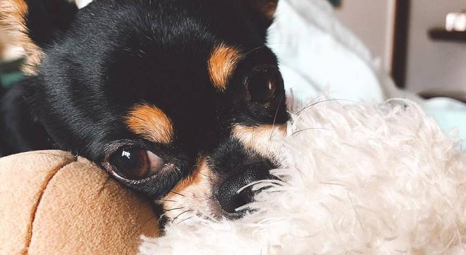 la casa de tu mascota que será tratado con amor, canguro en Madrid