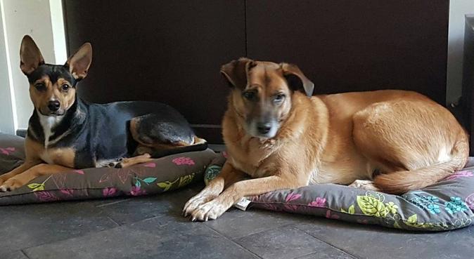coccole e passeggiate sono assicurate!!!, dog sitter a Genova