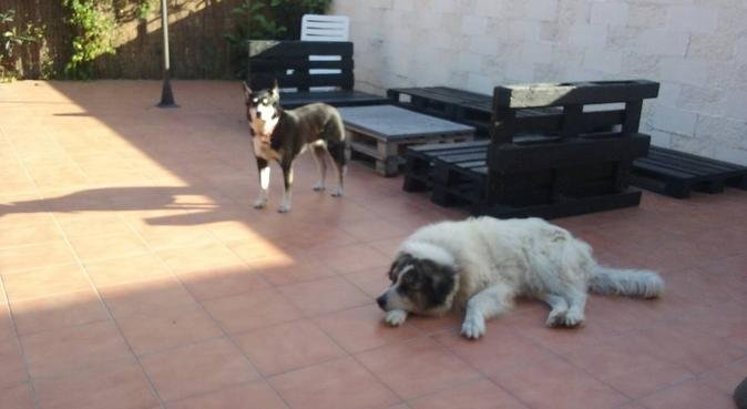 Tu perro estara como en casa!!!, canguro en Barcelona