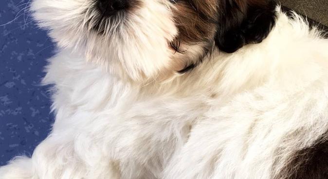Des belles balades en plein air 🌿, dog sitter à Angers, France