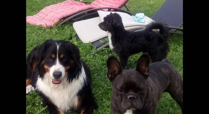 Les vacances chez une amie, dog sitter à Châtenoy-en-Bresse