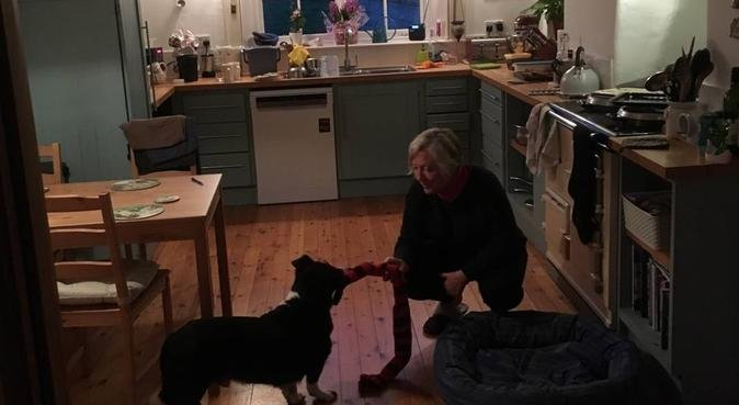 A country farm paradise for dogs, dog sitter in Lympstone, UK