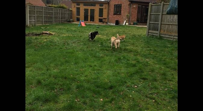 Loving dog care in my home or yours, dog sitter in Lincoln