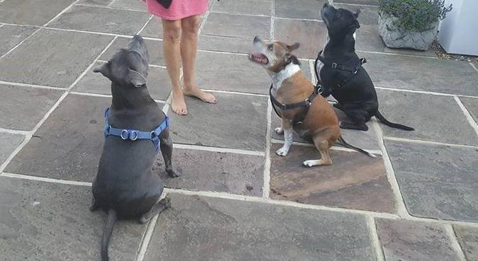 Walking in Basildon, Billericay and Wickford!!!, dog sitter in Basildon