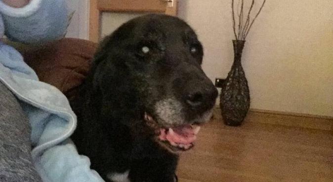 Gemanimals doggy day care., dog sitter in Belfast