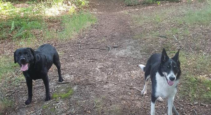 Dog Haven ✨, dog sitter in Bolton