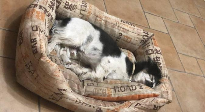 Passeggiate, movimento e tante coccole!, dog sitter a Pisa, PI, Italia