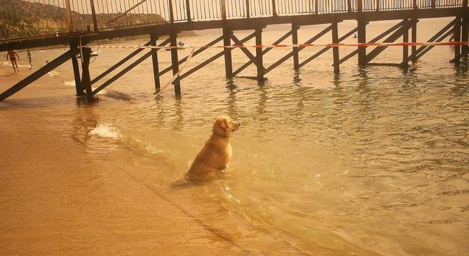 Happy dog walks, dog sitter in Glasgow
