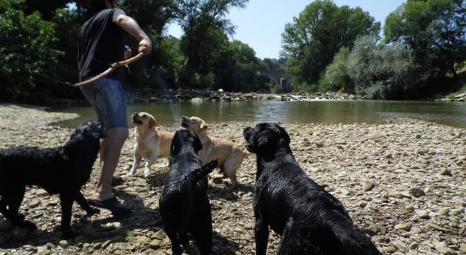 Esperienza e professionalità., dog sitter a Perugia, PG, Italia