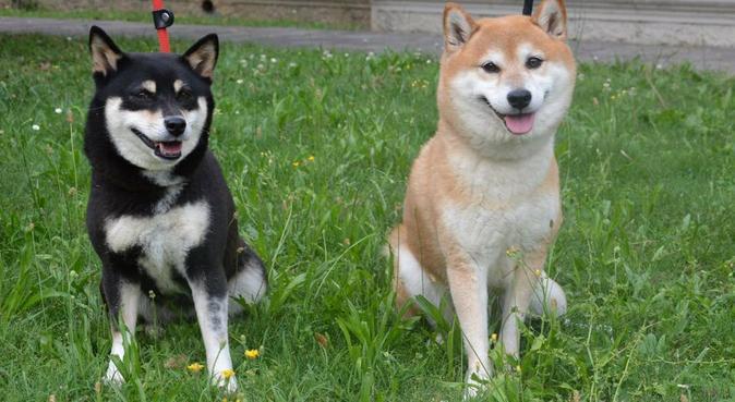 Amore e professionalità a passeggio nel verde, dog sitter a Alzano Lombardo