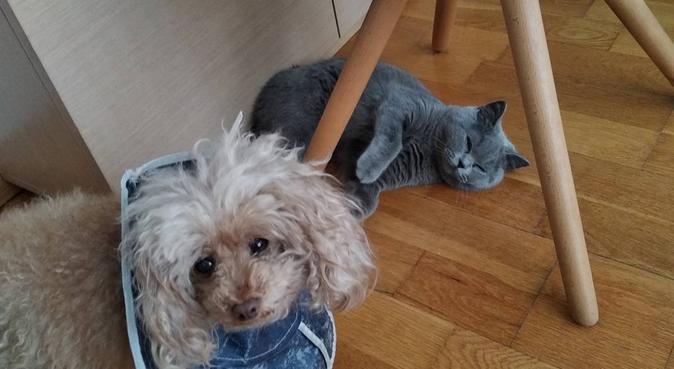 Cuidadora de perros, dog sitter à San Sebastián, España