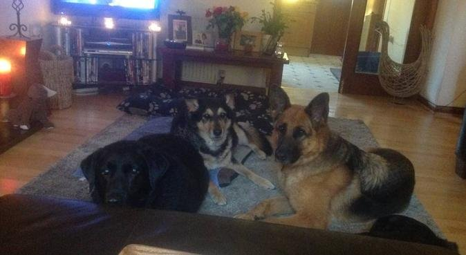 Home from home and lots of loves available., dog sitter in Talbot Green, Pontyclun, UK