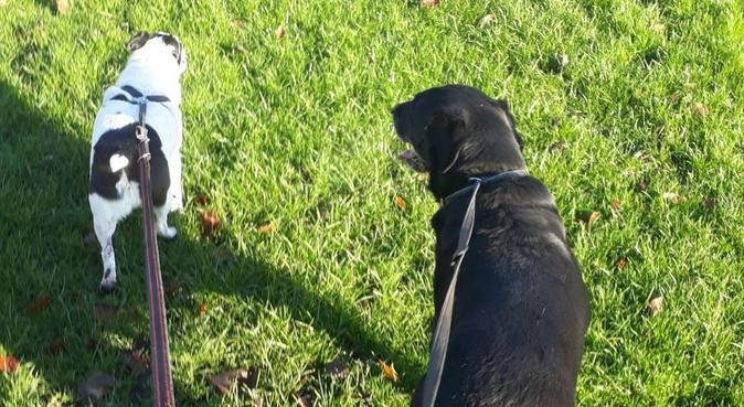 Dog Walking in Bury and the surrounding areas!, dog sitter in Bury