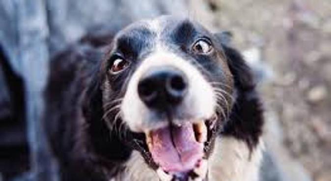 Dogsitter à Mérignac, dog sitter à MERIGNAC