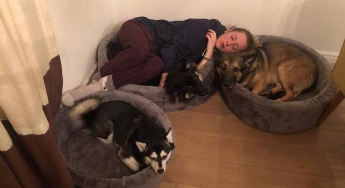 Quality dog services, hondenoppas in Landsmeer