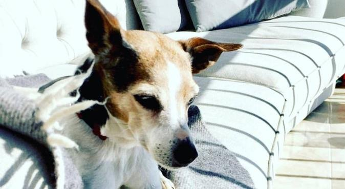 Swedish dog lover in palma, canguro en Palma de Mallorca, Spanien