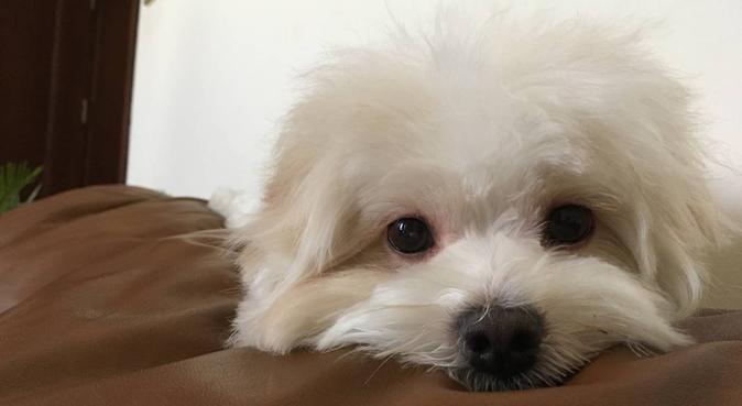 Dog Lover / Amatrice de Chiens (English/Français), dog sitter à Paris