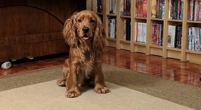 K9 to 5 Dog Walking, dog sitter in Newcastle Upon Tyne