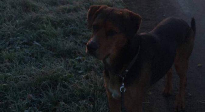 Erfaren hundpassare i centrala Lund, hundvakt nära Lund