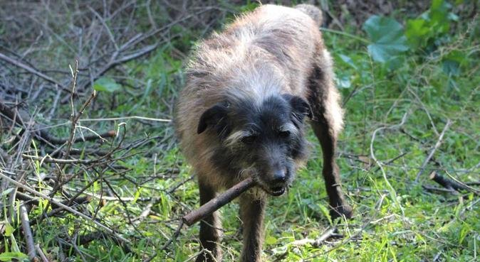 Promenade customisée selon les besoins du Chien, dog sitter à Nice, France