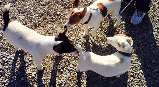 Super nounou Montpellier 🐕, dog sitter à Saint-Jean-de-Védas, France