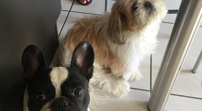 La grande récré des chiens, dog sitter à Cran gevrier