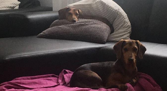 Kärleksfull & ansvarsfull hundpassning i Vaggeryd, hundvakt nära Vaggeryd