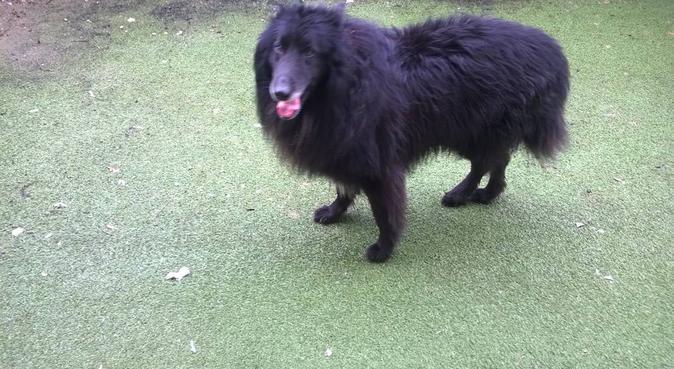 coccole e passeggiate, dog sitter a Brescia