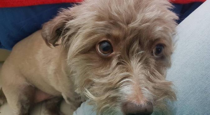 Passeggiate e Coccole per gli amici a 4 zampe, dog sitter a Perugia