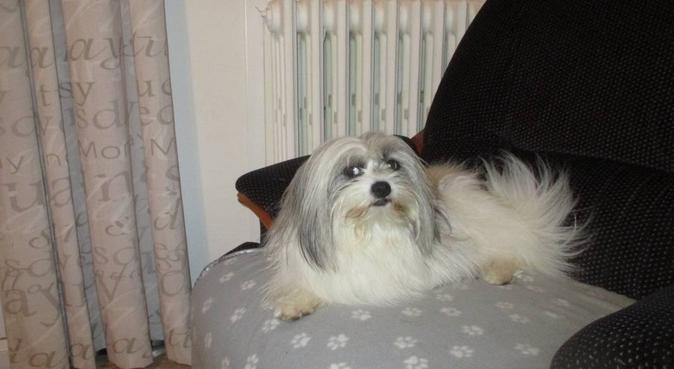 Toujours une présence, dog sitter à ROQUEFORT LA BEDOULE