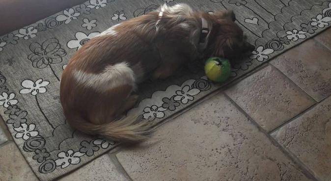 Miglior amico dei cani tante passeggiate e coccole, dog sitter a Collegno