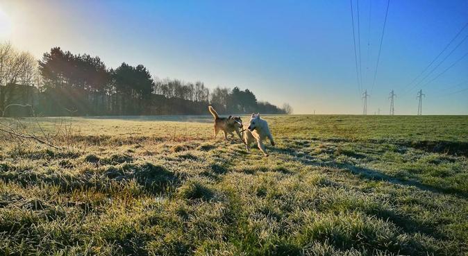 La famille Canin, dog sitter à Courdimanche (95800)