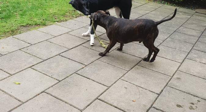 Hundpassning för soffpotatisen eller atleten, hundvakt nära Göteborg