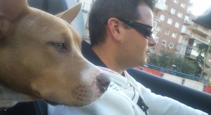 Paseador de perros en el corredor del Henares, canguro en Coslada