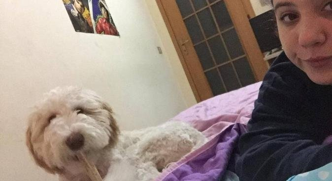 Coccole,divertimento per i vostri amici a 4 zampe!, dog sitter a Palermo