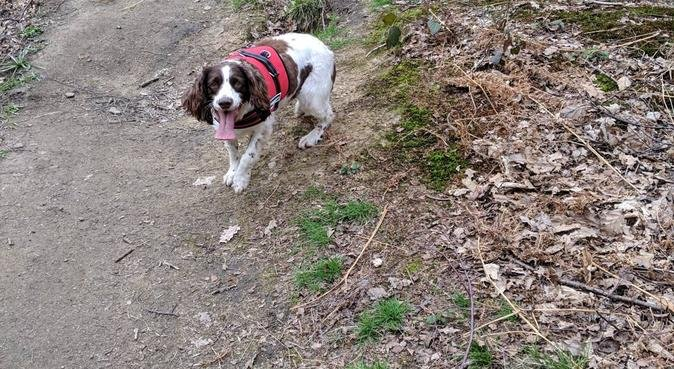 Bella's Buddies dog walking, boarding and pet care, dog sitter in Brighouse
