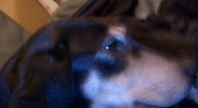 promenades joyeuses des chiens à Houilles, dog sitter à Houilles