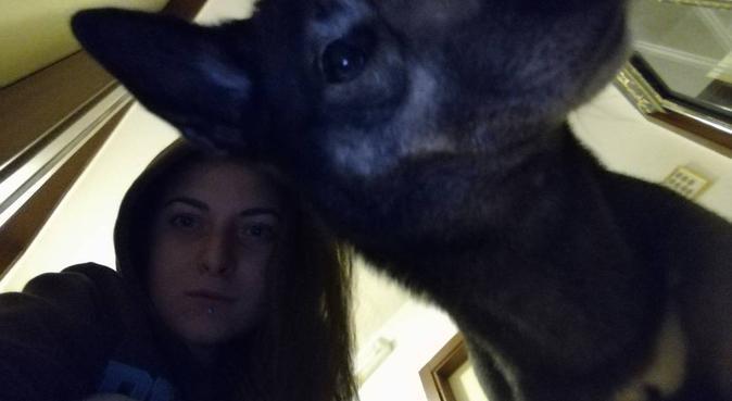 Coccole e divertimento assicurato!!, dog sitter a Firenze